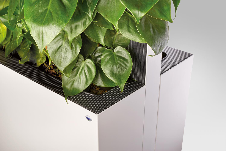 Grünpflanzen im Büro für ein gesundes Raumklima
